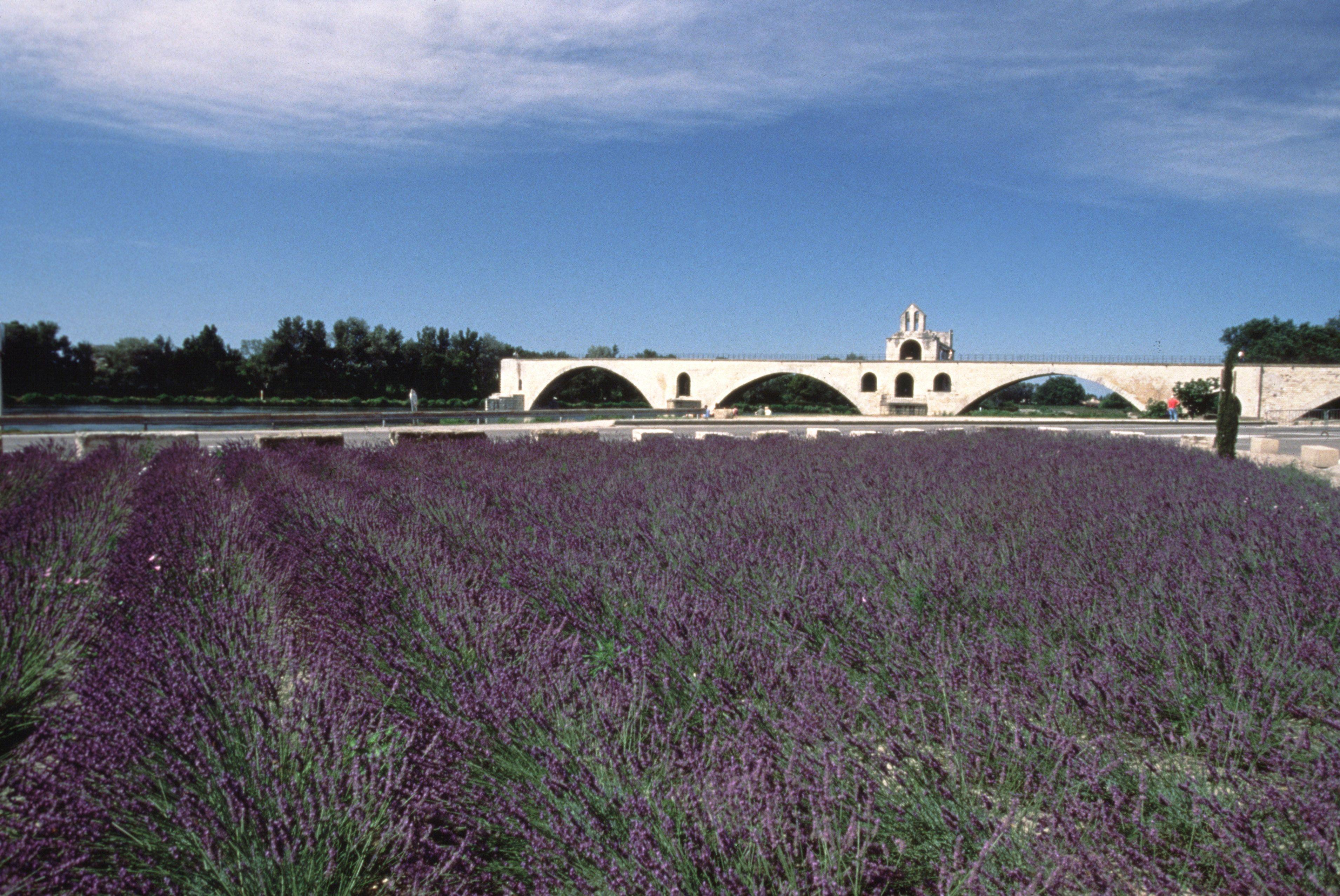 Provence: Blühender Garten Der Liebe   SZ Reisen GmbH   Ihr Kompetenter  Reiseveranstalter Für Qualitative Gruppenreisen