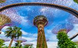 Supertree at Gardens by the Bay © martinhosmat083, Fotolia