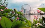 Garden City © Singapore Tourism Board